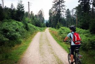 pedaleando-por-la-selva-negra-5251