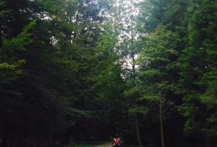 pedaleando-por-la-selva-negra-5252