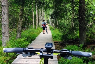 pedaleando-por-la-selva-negra-5258